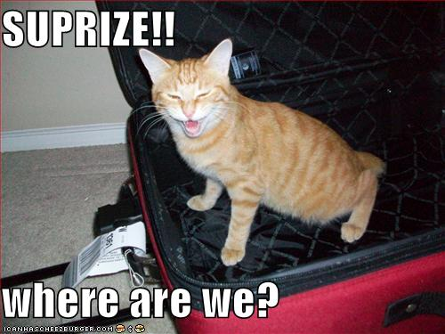 Funny-pictures-cat-packed-himself-in-your-suitcase