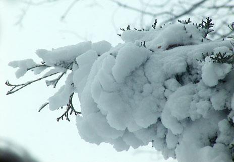 SnowStorm-Mar06